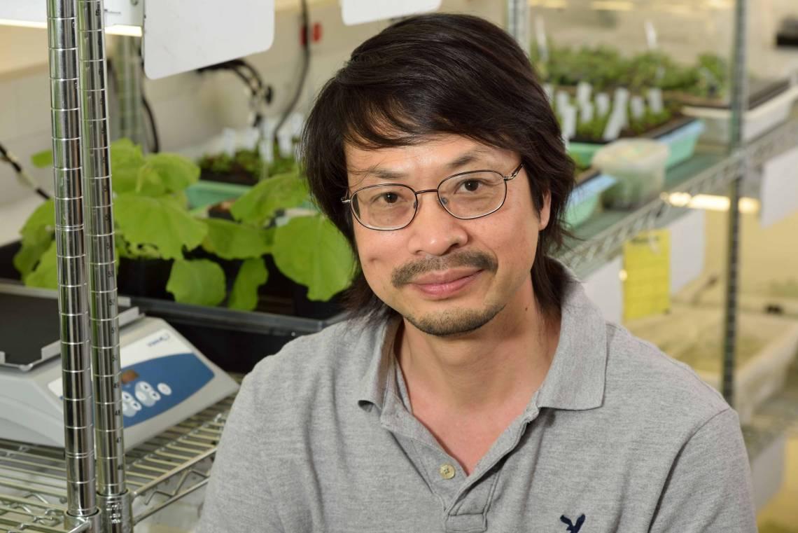 Professor Sheng-Yang He